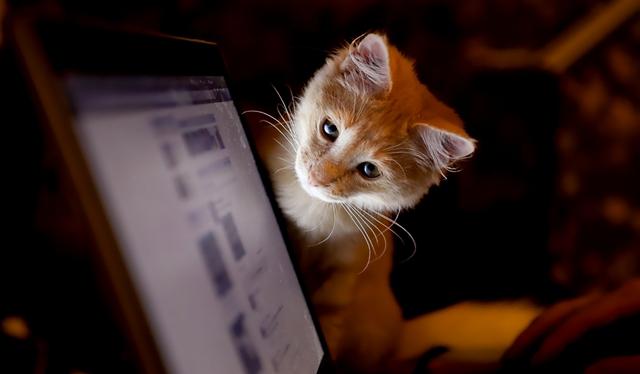 Как заработать на просмотре сайтов